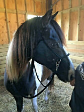 Brown Bitless Nylon Halter Bridle Sidepull w Rings & Reins Mustang 8152 Cob Pony