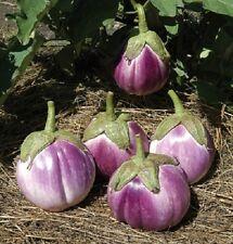 50 ITALIAN EGGPLANT ROSA BIANCA Solanum Seeds *Comb S/H