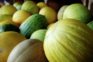 ROCKMELON 'Heirloom Mix' 20+ seeds mixed vegetable garden fruit cantaloupe melon