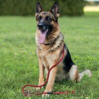 Long Dog Training Lead Heavy Duty Braided Nylon Rope with Handle for Large Dogs