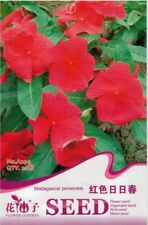 New listing 20 Pcs Madagascar Periwinkle Seed Catharanthus Roseus Beautiful Flower Seed A294