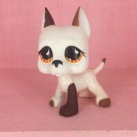 LPS 750 Littlest Pet Shop toys Orange Eyes Great Dane Dog White Brown Puppy Gift