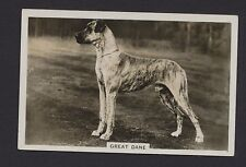 Great Dane dog from series Dogs by Senior Service Cigarettes card #9