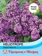 Thompson & Morgan - Flowers - Heliotropum Dwarf Marine - 150 Seed