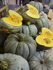 Pumpkin - Jarrahdale (cucurbita maxima) 10 Reliable Viable Seeds