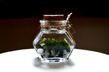 Tiny Terrarium, DIY kit with Glass bottle & Cork Lid, Mini Garden, Gift Idea