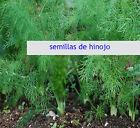 200 aprox. Semillas de Hinojo (Foeniculum Vulgare) seeds 2 gramos
