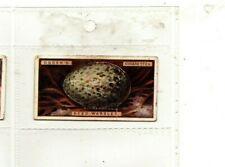 Ogdens Cigarette Card, Birds Eggs (Cut Outs) 1923, 46 Reed Warbler