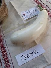 Weiße Aubergine - Casper - 5+ Samen GEISTERHAFT und FEIN!