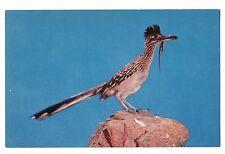 Desert Road Runner with Lizard in his Beak Runs 18mph Postcard