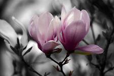 Canvas Floral Pink Art Prints