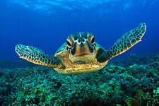 BABY SEA TURTLE * QUALITY CANVAS ART PRINT