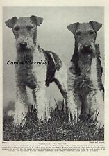 2 ALERT FAMOUS NAMED WIRE HAIRED FOX Terrier Dogs 1934 Vintage Art Print DOG