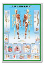 The Human Body Poster Silver Framed Ready To Hang Frame Free P&P