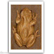 © ART - Painting Realism TREE FROG Wildlife Animal Original artist print by Di