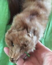 Three Whole Mink W Eyes Nose Feet Tails Blond Mink From 1930's