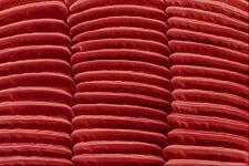 645039 Piojo Pata Trasera A4 Foto Textura impresión