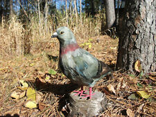 REALISTIC PIGEON REPLICA Fake BIRD PROP Figurine Toy ck109grey FREE SHIPPING USA