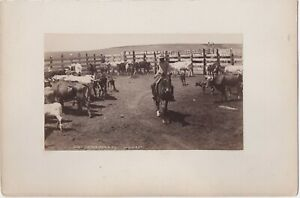 Original 1880s William Henry Jackson Photo of Cowboy in a Corral # 3621