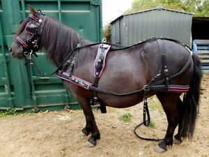 Horse Harness /Pony/Mini,shet,cob,Full Black and colored Harness All available n