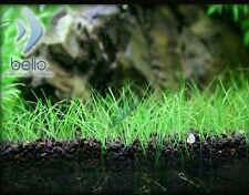 200 Plant Grass Seeds Aquatic Decor Home Garden for FishTank/Pond