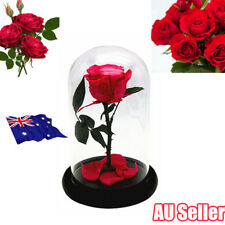 Beauty and the Beast Enchanted Rose Fairy Tale Belle Glass Prop Home Decor Gifts