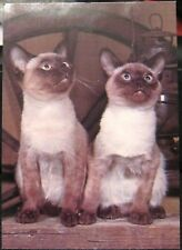 Postcard Dusty and Smudge Siamese Kittens - unposted