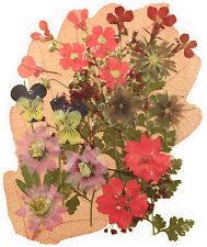 Pressato fiori lobelia Verbena Uragano LARKSPUR Pansy Borragine Baby respiro