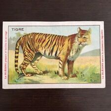 Chromo Bledine Jacquemaire Animaux Sauvages Le TIGRE - The TIGER