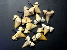 "1 "" Black Wire Wrapped Lamna Moroccan Fossil Shark Teeth for Necklaces 10 pcs"