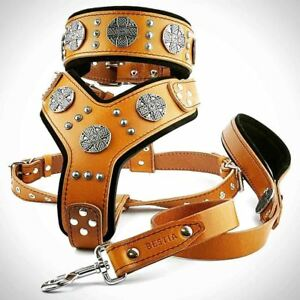 Bestia Maximus Set! harness+collar+lead. TOP Quality. made in Europe