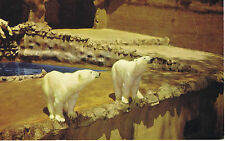 Vintage SAN DIEGO ZOO California POLAR BEARS LM-5 Color Postcard UNUSED