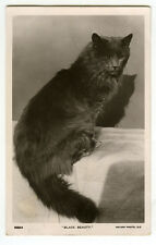 c 1907 Vintage Black Beauty Pretty Cat British photo postcard