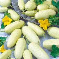 10 pcs White Wonder Cucumber vegetable seeds