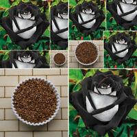50 STÜCKE Erstaunliche Rose Samen Seltenes Schwarzes Mit Weißen Rose