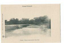 CONGO FRANCAIS , CHASSES : HIPPOPOTAMES PRENANT LEURS EBATS