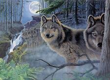 Malen nach Zahlen PAL39 Wölfe