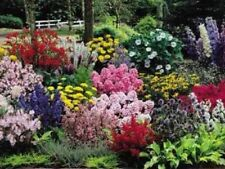 Cottage Garden Flower Mix ( Approx 300 Seeds ) Beautiful Selection Easy To Grow