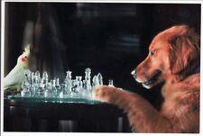 Postcard Golden Retriever and Cockatiel Bird Play Chess Game