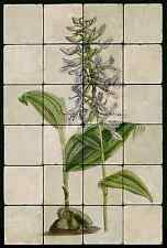 1624 Brownlea Coerulea Orchid  Mural Tumbled Marble Tiles Kitchen Ideas
