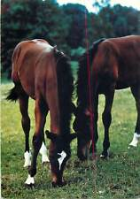 Fotokunst Groh Munchen animals topic postcard horses