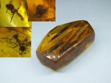 Bursztyn polerowany  z inkluzją ,  polished amber with  inclusion , (10569)