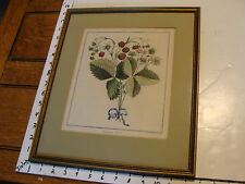 1768 FRAMED HAND COLORED STRAWBERRY ENGRAVING by Haussard: FRAISER VERT