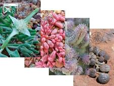 STAMPS featuring succulents - maxi cards/post cards & succulent booklet