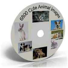 6800 Cute Animal Images Images on DVD