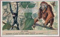 Orangutan And Gibbon Monkey Ape Singes Primate 60+ Trade Ad Card