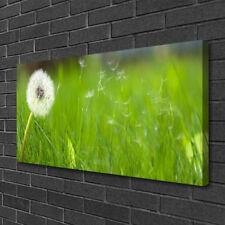 Leinwand-Bilder Wandbild Canvas Kunstdruck 125x50 Pusteblume Löwenzahn Pflanzen