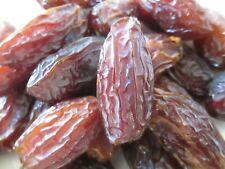 5 Fresh medjool date palm Seeds (Phoenix dactylifera)