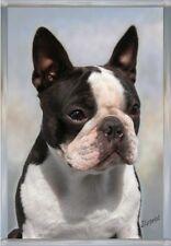 Boston Terrier A6 Blank Card Design No 3 By Starprint