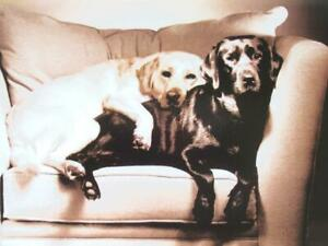 """""""I Love Doing Nothing as Long as It's with You"""" AVANTI CARD Romance / Family DOG"""